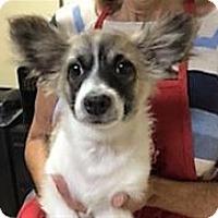 Adopt A Pet :: BANDIT - Pleasanton, CA