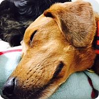 Adopt A Pet :: Orvis - Davenport, IA