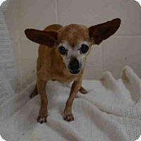 Chihuahua Dog for adoption in Hanford, California - *ERNEST