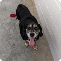 Adopt A Pet :: Sparky - Paducah, KY