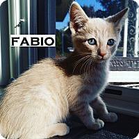 Adopt A Pet :: Fabio - Speedway, IN