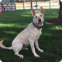 Adopt A Pet :: Luna - Walnut Creek, CA