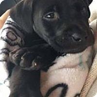 Adopt A Pet :: Zeus - Aiken, SC