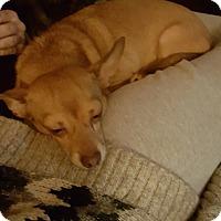 Adopt A Pet :: CHAMP - East Windsor, CT