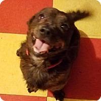 Adopt A Pet :: Choco - Miami, FL