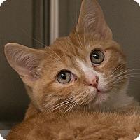 Adopt A Pet :: Frank - Toronto, ON