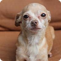 Adopt A Pet :: Ashlee - tampa, FL