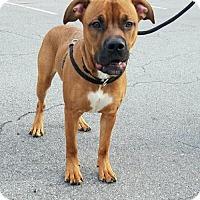 Adopt A Pet :: Bishop - Oakhurst, NJ