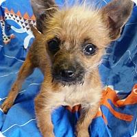 Adopt A Pet :: Maximus - Los Angeles, CA