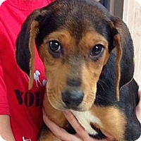 Adopt A Pet :: Abilene - Green Bay, WI