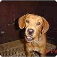 Adopt A Pet :: Aspen - Cumming, GA