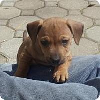 Adopt A Pet :: Baby Kasey - Marlton, NJ