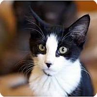 Adopt A Pet :: beauty's Baby3 - Scottsdale, AZ