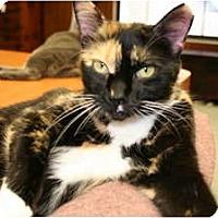 Adopt A Pet :: Sunny - Bonita Springs, FL