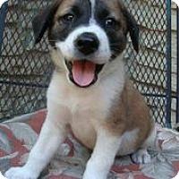 Adopt A Pet :: Ally Oop - Austin, TX