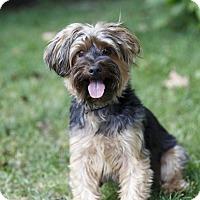Adopt A Pet :: Ernie - Rigaud, QC