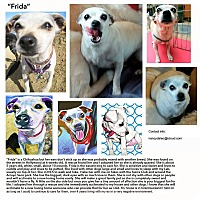 Adopt A Pet :: Frida - Los Angeles, CA
