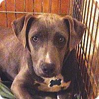 Adopt A Pet :: Buster! - Sacramento, CA