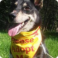 Adopt A Pet :: Eka - Louisville, KY