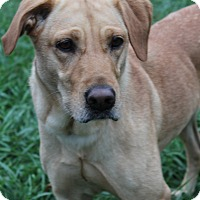 Adopt A Pet :: Miley - Waldorf, MD