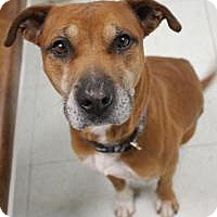 Adopt A Pet :: Ross - Yukon, OK