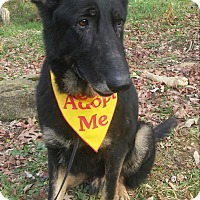 German Shepherd Dog Dog for adoption in Louisville, Kentucky - Soli