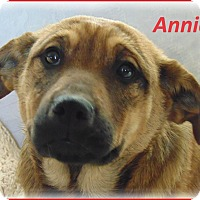 Adopt A Pet :: Annie-Adoption Pending - Marlborough, MA