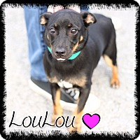 Adopt A Pet :: Lou Lou (reduced fee!) - Brattleboro, VT