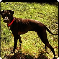 Adopt A Pet :: Mella Courtesy Listing - Sparta, NJ