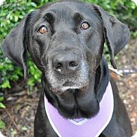 Adopt A Pet :: Jessie - Atlanta, GA