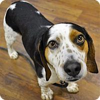 Adopt A Pet :: Ricky - Lake Odessa, MI
