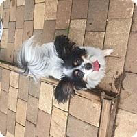 Adopt A Pet :: Dubbie - Spartanburg, SC