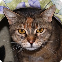 Adopt A Pet :: Magic - North Branford, CT