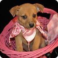 Adopt A Pet :: Dorthy Ann(puppy) - Crocker, MO