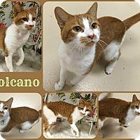 Adopt A Pet :: Volcano - Joliet, IL