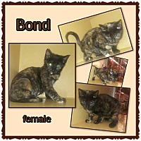 Adopt A Pet :: Bond - Richmond, CA