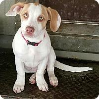 Adopt A Pet :: ELLIE - Gustine, CA