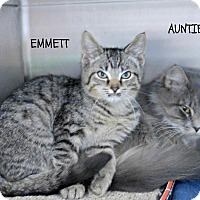 Adopt A Pet :: Emmett - Spring Brook, NY
