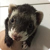 Adopt A Pet :: Nala & Chevy - Paramus, NJ