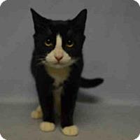 Adopt A Pet :: NERO - Brooklyn, NY