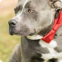 Adopt A Pet :: Chance - Calgary, AB