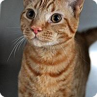 Adopt A Pet :: Iceman - Fort Leavenworth, KS