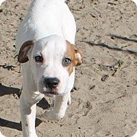 Adopt A Pet :: Peanut - Ocala, FL