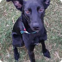Adopt A Pet :: Jack - Austin, TX