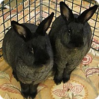 Other/Unknown Mix for adoption in Los Angeles, California - Go Girls -- Trio