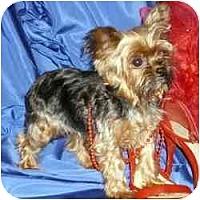 Adopt A Pet :: Calie - The Village, FL