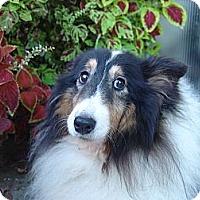Adopt A Pet :: Ivy - San Diego, CA