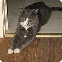 Adopt A Pet :: Rosco - london, ON