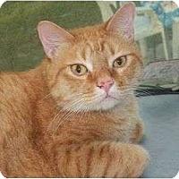 Adopt A Pet :: Garfield and Nemo - Vero Beach, FL