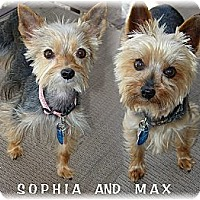 Adopt A Pet :: Sophia and Max - Palm City, FL